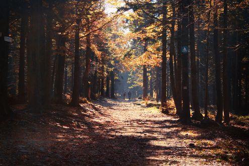 Обои Люди прогуливаются по дороге в осеннем лесу