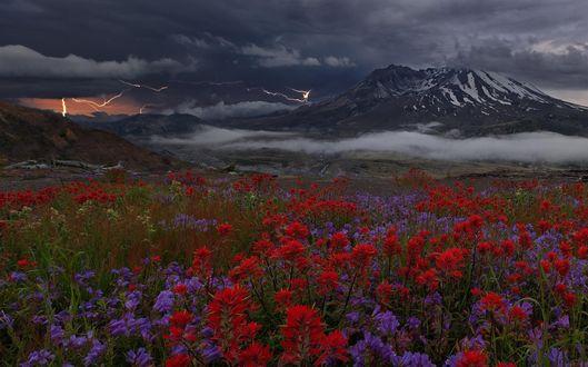 Обои Поляна фиолетовых и красных цветов на фоне гор, над которыми сверкают молнии