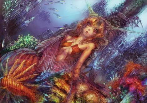 Обои Девушка - русалка среди кораллов