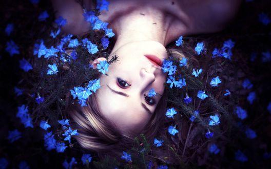 Обои Девушка лежит на поляне синих цветов