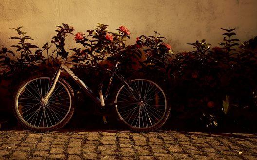 Обои Велосипед стоит у кустов цветов