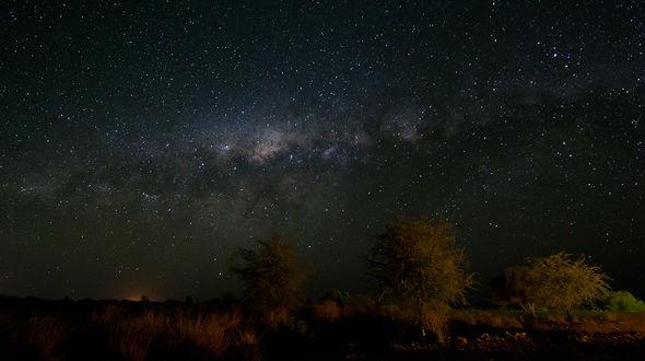 Обои Деревья, с растущим вокруг ковылем на фоне красивого, звездного, ночного неба и Млечного пути