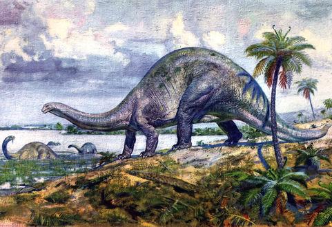 Обои Один бронтозавр стоит на берегу, а еще три питаются в озере