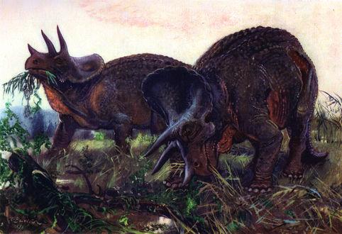 Обои Два динозавра трицератопса едят траву