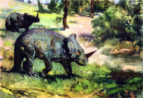 Обои Маргиноцефальный динозавр Monoclonius