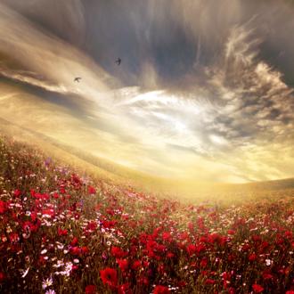Обои Поле цветов под облачным небом