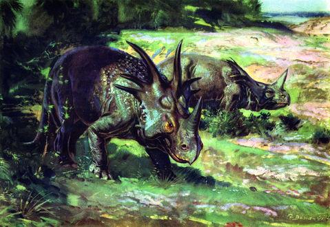 Обои Маргиноцефальный динозавр Styracosaurus albertensis