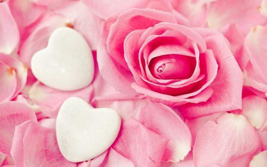 Обои Два белых сердечка среди розовых лепестков розы