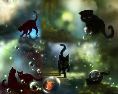 Обои Черные котята в разных ракурсах с водными пузырями