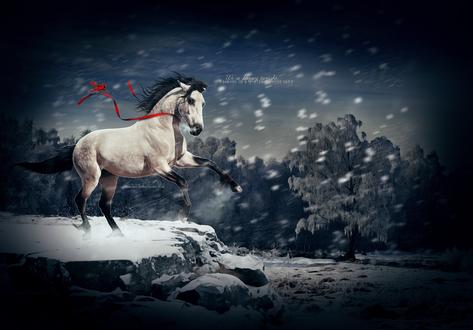 Обои Светлая лошадь с красной лентой, на которой сидит птица, стоит на каменистом пороге, by Raiiiny