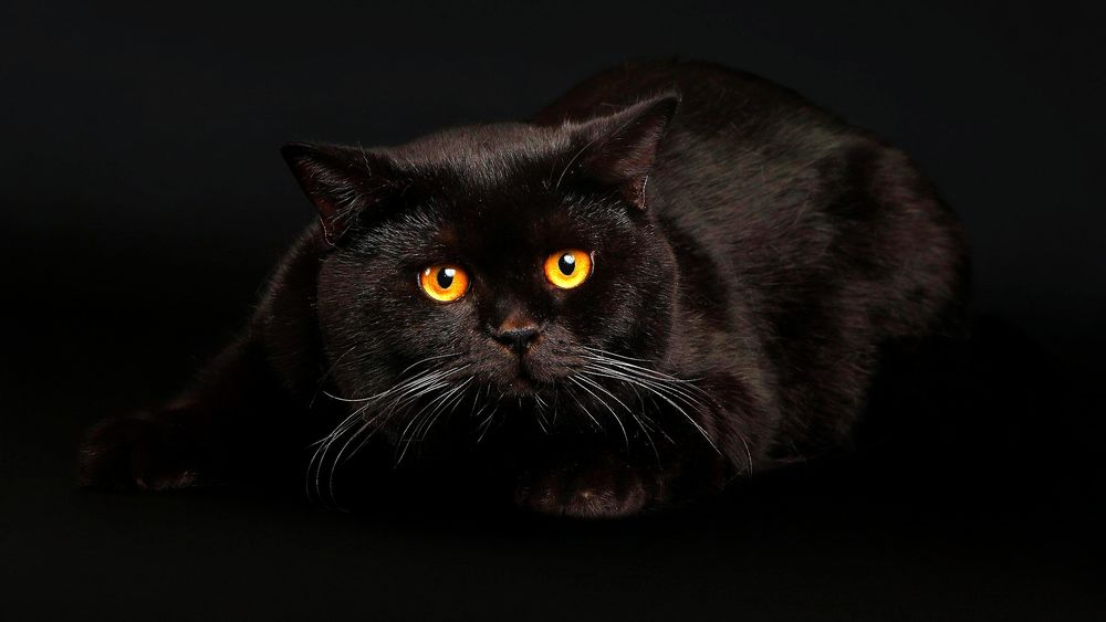 Черный кот с желтыми глазами картинки