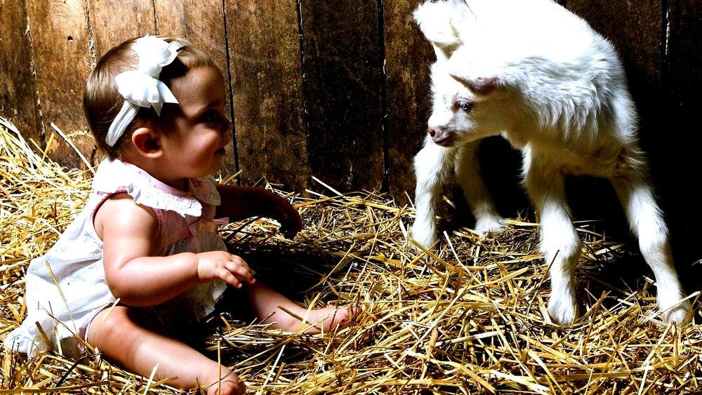 Обои для рабочего стола Ребенок сидит на соломе рядом с белым козленком