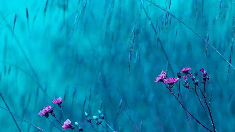 Картинки природы на бело голубом фоне