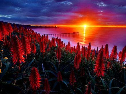 Обои Цветочное поле на морском побережье на фоне заката солнца в пасмурном небе