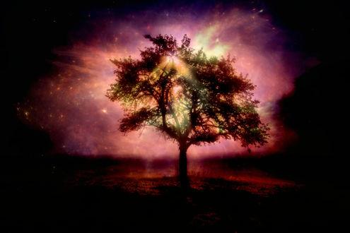 Обои Одинокое дерево, сквозь которое проходят лучи солнца, на фоне розово-фиолетового неба