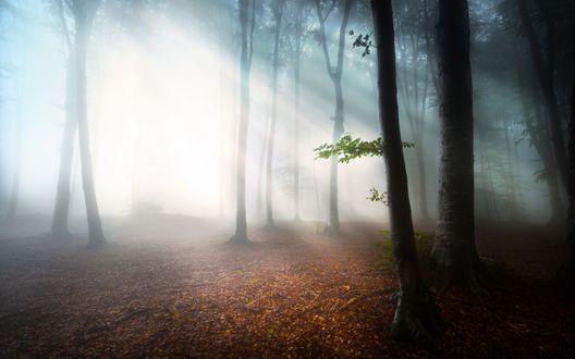 Обои Солнечный свет пробивается в осенний лес в густом молочном тумане