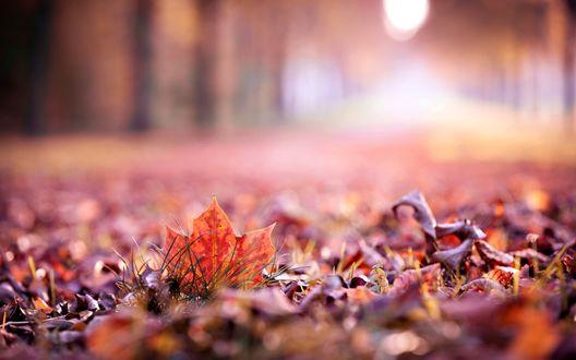 Обои Сухие опавшие листья