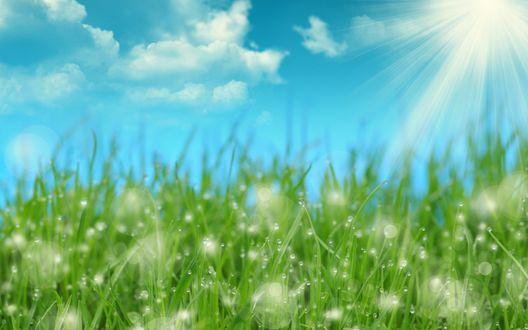 Обои Солнечные лучи на утреннем небосклоне осветили поляну с зеленой травой, покрытой капельками росы
