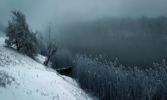 Обои Заснеженный берег реки, покрытый высоким, сухим камышом и опустившимся на водоем густым туманом, работа дыхание зимы, фотограф Scorpio