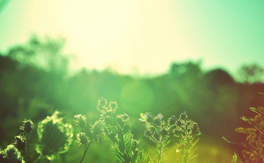 Обои Зеленые колючки освещенные солнцем