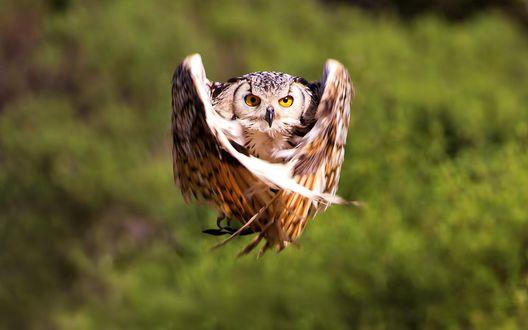 Летящая сова пошаговое - e2ee3