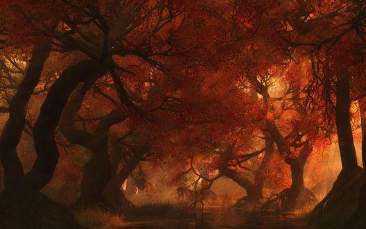 Обои Водоем в осеннем лесу