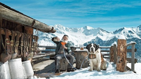 Обои Собаку породы сербернар - местного спасателя, снабжают бочонком с коньяком, для спасения людей, замерзающих в горах