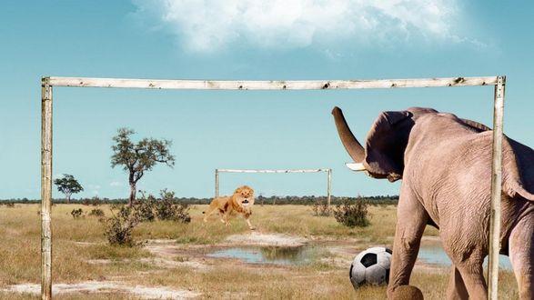 Обои Слон и лев играют в футбол посреди саванны, решая, кто из них главнее среди зверей