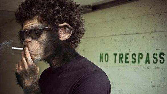 Обои Обезьяна в черных очках задумчиво пускает сигаретный дым, повернувшись спиной к надписи No trespass