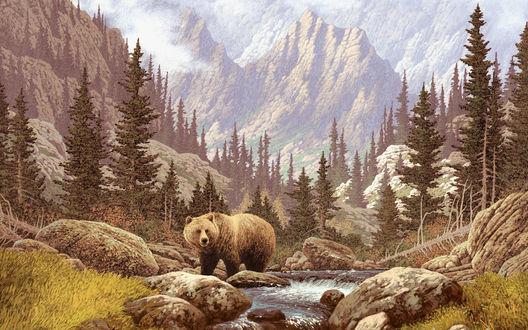 Обои Медведь стоит на камнях у ручья на фоне елей и высоких гор