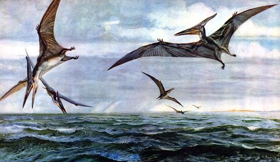 Обои Птеранодоны летают над морем