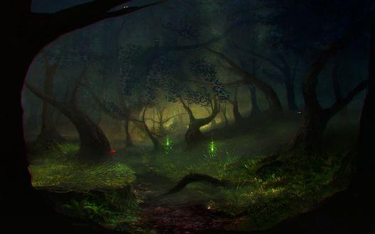 Обои Тропинка в темном лесу, над травой летают светлячки
