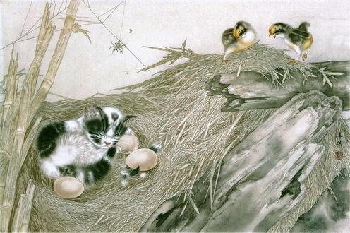 Обои Котенок в птичьем гнезде