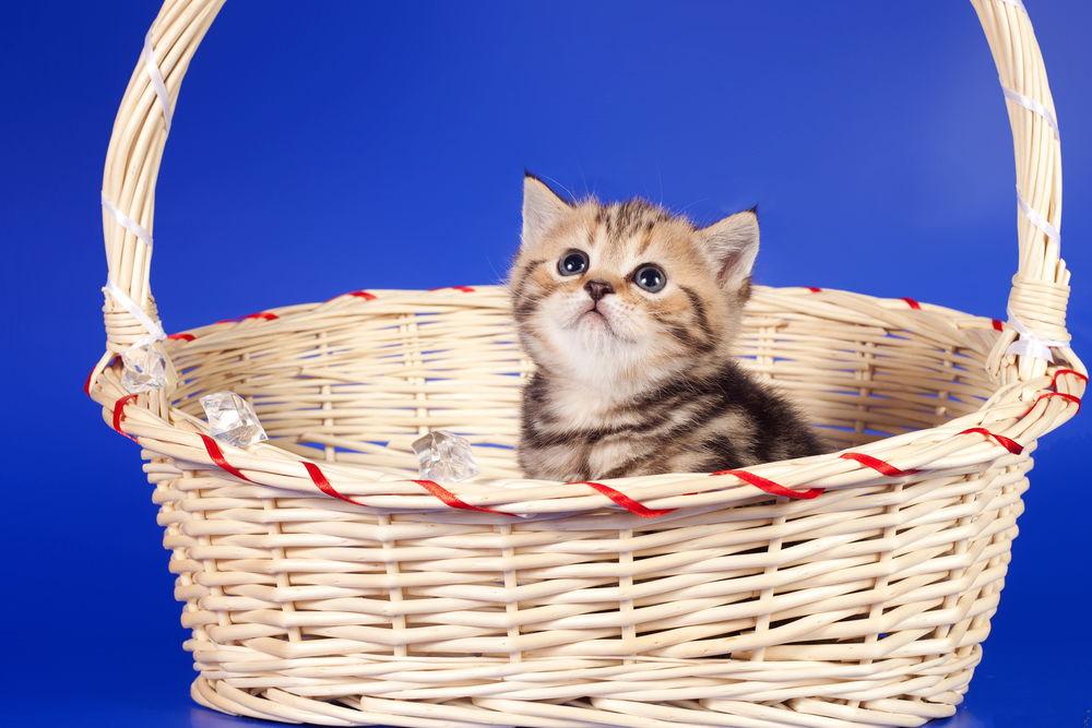 Фотки серые котята в корзинки