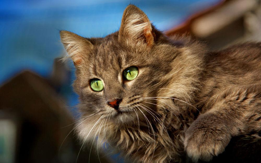 по-разному, картинки с бурыми котами этот праздничный день