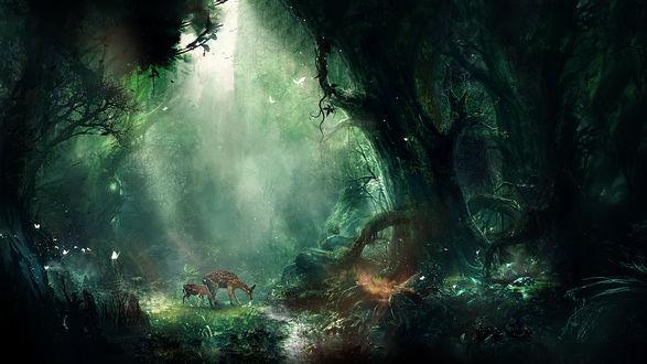 Обои Два оленя в лесу, в окружении заросших деревьев и летающих бабочек, автор t1na