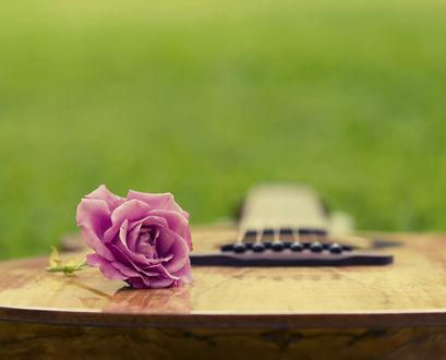 Обои Роза лежит на гитаре