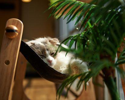 Обои Кошка спит в ипровизированном гамаке около комнатного растения