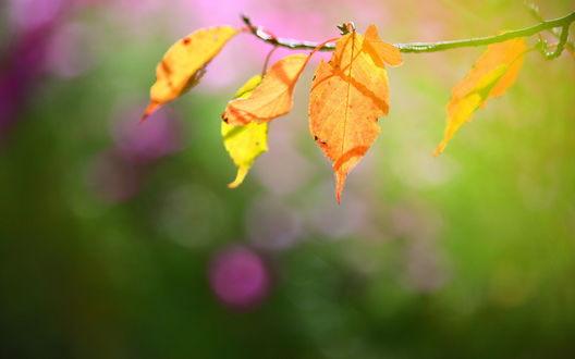 Обои Осенние листья на размытом фоне