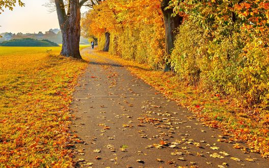 Обои Дорога, усыпанная осенними листьями