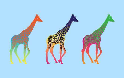 Обои Три жирафа в стиле поп-арт на нежно-голубом фоне