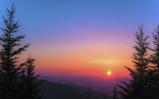 Обои Ели на фоне заката солнца