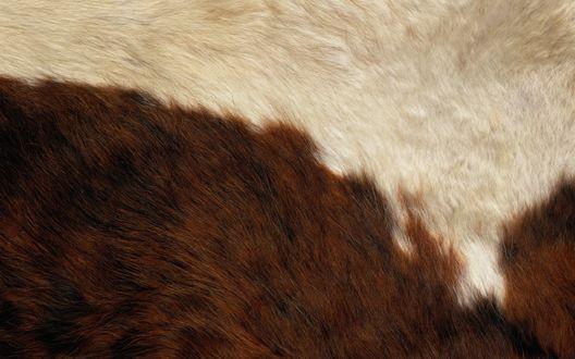 Обои Гладкая поверхность бело-коричневой шкуры