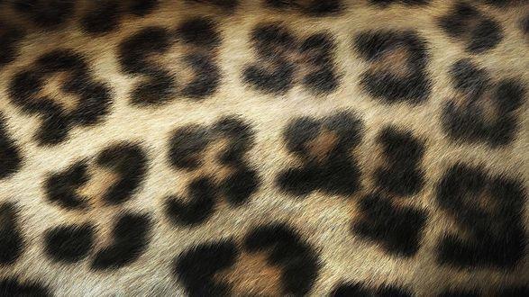 Обои Шкура леопарда с темными пятнами