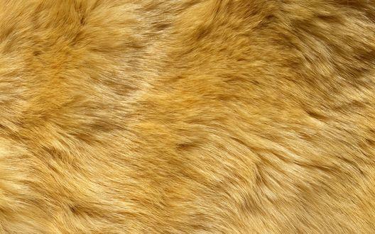 Обои Длинные светлые волосы на шкуре льва