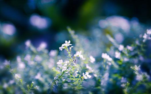 Обои Нежные маленькие цветы в траве
