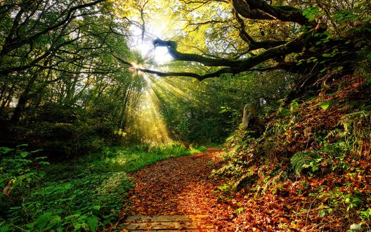Обои Дорога, усыпанная осенними листьями на фоне деревьев, через листву пробиваются лучи солнца