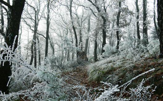 Обои Первые заморозки в осеннем лесу