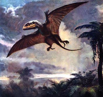 Обои Динозавр диморфодон парит в воздухе