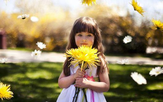 Обои Девочка с желтыми хризантемами в руках, вокруг нее летают цветы